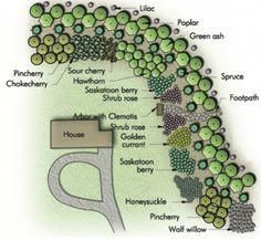 """Another Pinner Wrote: By throwing a curve at shelterbelts and using groupings of drought tolerant shrubs, you gain the dimensions of colour, scent, songbirds and fruit, pg. 12 of """"Creating the Prairie Xeriscape"""" by Sara Williams Acreage Landscaping, Front House Landscaping, Landscaping Ideas, Backyard Ideas, Outdoor Ideas, Landscape Plans, House Landscape, Landscape Design, Landscape Architecture"""