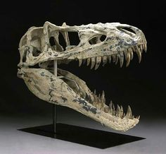 Rare Tyrannosaurid Skull - Tyrant Lizard from the Age of Dinosaurs. Alioramus remotus. Late Cretaceous. Nemegt Formation, Gobi Desert, Central Asia