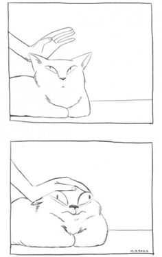 How to pet a cat 101