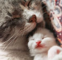 Cats sleeping by AnastasiaSia ~ Sweet Dreams beautiful friends ♥