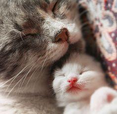 Cats sleeping by AnastasiaSia ~ Sweet Dreams beautiful friends ♥