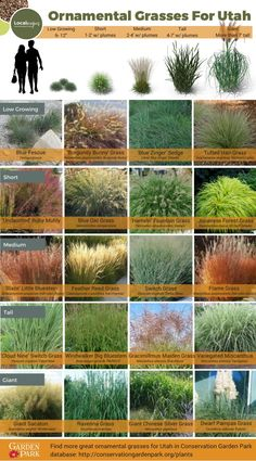 Annual plants ornamental grass landscape front gardens, switchgrass ornamental grasses, tuin g Landscape Edging Stone, Ornamental Grass Landscape, Ornamental Grasses, Landscape Design, Garden Design, Landscape Grasses, Desert Landscape, Drought Tolerant Landscape, Farmhouse Landscaping