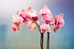 Har Du Orkideer Derhjemme? Hvis Du Har, Skal Du Prøve Dette Trick ASAP