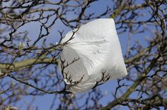 photo of plastic bag stuck in tree