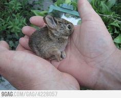 Found a bunny in my girlfriend's yard