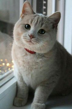 Find healthy kittens & cats for sale in India. Buy cats & kittens for sale online from verified cat breeders in India. We have cute little furry friends available for you in your local area. Cute Cats And Kittens, I Love Cats, Crazy Cats, Cool Cats, Kittens Cutest, Fluffy Kittens, Fluffy Cat, Pretty Cats, Beautiful Cats