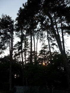 Fonyódliget Celestial, Sunset, Outdoor, Outdoors, Sunsets, Outdoor Games, The Great Outdoors, The Sunset