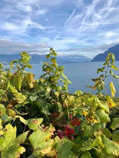 The Lavaux UNESCO World Heritage Vineyards in Vaud. A walk thrugh one of the most scenic areas of Switzerland with the terraced vineyards. Vevey, Dates, Places To Travel, Places To Visit, To Go, Cultural Significance, Walking Routes, Journey, Lake Geneva