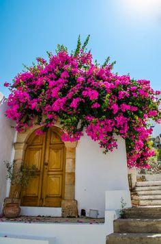 Pink bougainvillea in Lindos, Rhodes, Greece