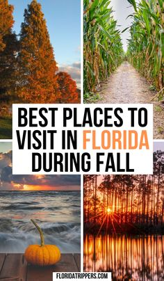 Florida In Fall: What To Do And Where to Go | fall in florida | fall in florida things to do | things to do in the fall in florida | fall travel in florida | florida in the fall | fall destinations america | fall destinations usa | autumn in florida | florida autumn | autumn travel destinations | #fallinflorida #floridatravel Usa Travel Guide, Travel Usa, Travel Guides, Travel Tips, Travel Destinations, Visit Florida, Florida Travel, Asia Travel, Big Move
