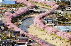 Flores de cerejeira acabaram de florescer nessa cidade japonesa. As fotos são absolutamente mágicas! - Histórias com Valor
