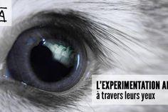 L'expérimentation animale à travers leurs yeux