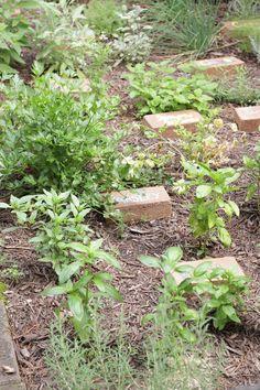 Herb Garden with DIY Brick Markers