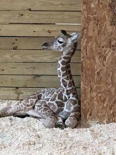April's baby boy 042817