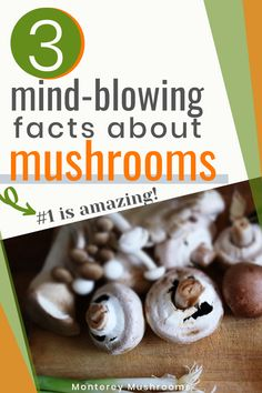 You need to read about these amazing mushroom health benefits! These mushroom facts are incredible and you'll love learning more about nutrition. Edible Mushrooms, Wild Mushrooms, Stuffed Mushrooms, Mushroom Nutrition Facts, Vegetable Nutrition, Best Mushroom Recipe, Mushroom Recipes, Human Nutrition, Nutrition Tips