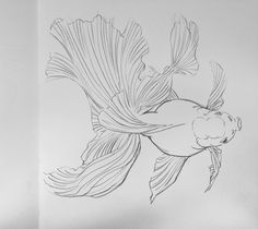 "Képtalálat a következőre: ""goldfish drawing art"" Fish Drawings, Animal Drawings, Art Drawings, Drawing Art, Chinese Painting, Chinese Art, Poisson Combatant, Fish Crafts, Fish Art"