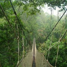 I will be taking an amazon canopy walkway tour in Iquitos, Peru. Going to die. I hate heights ahhhhh