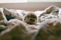 Omg I want that little guy! Too cute :)
