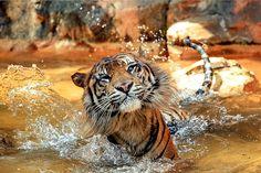 just swimming
