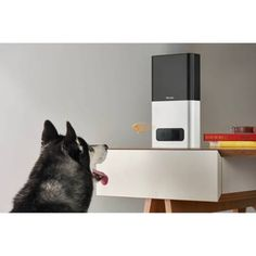 The Petcube Bites Interactive Wi-Fi Pet Camera lets pet owners view their pets through their smartphone from anywhere with HD clarity. The included treat dispenser allows you to award your pets remotely. Dog Separation Anxiety, Dog Anxiety, Pet Camera, Dog Training Classes, Cool Gadgets, Dog Treats, Your Pet, Wifi, Dog Cat