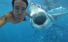 Happy Shark Week!: Pete Wentz's Fake Shark Attack Selfie Goes Viral—So We've Created 6 More Celeb Shark Selfies, Obvi