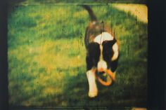'Dream of a White Dog' photo-etching in four colour process intaglio. Exhibited in jyväskylä, Finland. From original super 8 footage.