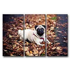 3 Panel Wall Art Painting White Pug In The Fallen Leaves Prints On Canvas The Picture Animal Pictures Oil For Home Modern Decoration Print Decor For Bedroom So Crazy Art http://www.amazon.com/dp/B00M93O8AY/ref=cm_sw_r_pi_dp_MUp0ub1TZ1GSE