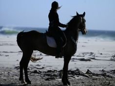 Horse Riding - Horse Riding on Noordhoek Beach, Cape Town, South Africa Horse Riding, Cape Town, South Africa, Horses, Beach, Animals, Animales, The Beach, Animaux