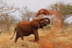 Kostenloses Bild auf Pixabay - Elefant, Afrika