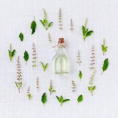5 DIY Witch Crafts on a Budget Best Essential Oils, Young Living Essential Oils, Facial Oil, Facial Cleanser, Ayurveda, Basil Spice, Eucalyptus Citronné, Ravintsara, Gut Health