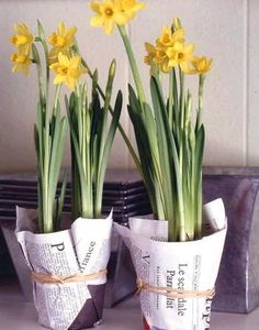 Spring bulbs such as daffodils & hyacinths would look great wrapped in newspapers and tied with string