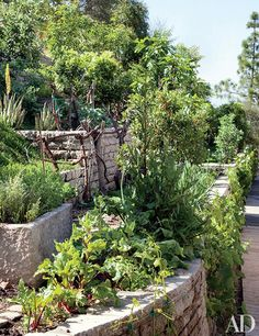 Gardening with the Stars Photos Potager Garden, Terrace Garden, Garden Landscaping, Ornamental Plants, Eva Green, Organic Vegetables, Garden Supplies, Architectural Digest, Vegetable Garden