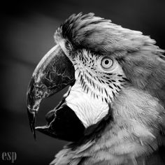 How to Make Your Black and White Photography Amazing!