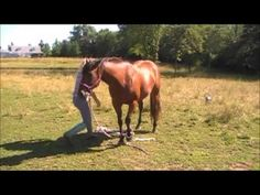 Teach your horse to bow! This is the best one I've found!! I'm really excited to try this (the other's didn't work)!!