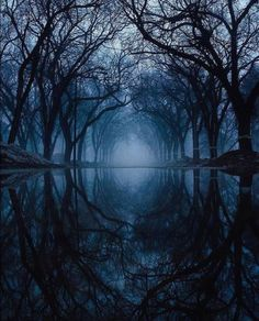 The best photos of beautiful landscapes from all around the earth. Dark Photography, Landscape Photography, Beautiful Places, Beautiful Pictures, Dark Forest, Magical Forest, Dark Places, Fantasy Landscape, Nature Pictures