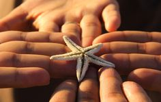 starfish by Nalin Agarwal on 500px  for more updates visit https://www.facebook.com/iSeekNirvana