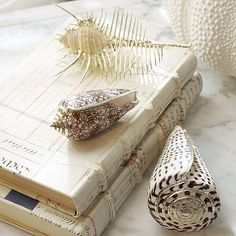 seashells and books