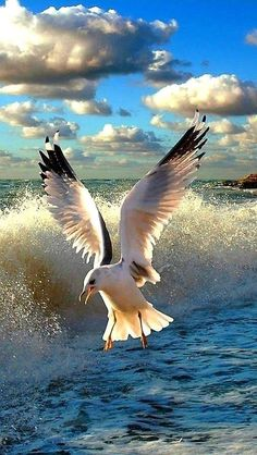 Birds flying in the sky beautiful bird flying in the sky 49 Best ideas Beautiful Birds, Animals Beautiful, Beautiful Creatures, Beautiful Places, Image Nature, Sea Birds, Seascape Paintings, Painting Art, Colorful Birds