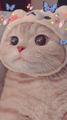 Wallpaper Gatos, Funny Cat Wallpaper, Cute Panda Wallpaper, Iphone Wallpaper Cat, Cute Baby Cats, Cute Cats And Dogs, Kittens Cutest, Cute Kawaii Animals, Cute Little Animals