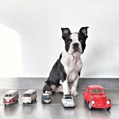 Feliz domingo   #PetsWorldMagazine #RevistaDeMascotas #Panama #Mascotas #MascotasPanama #MascotasPty #PetsMagazine #MascotasAdorables #Perros #PerrosPty #PerrosPanama #Pets #PetsLovers #Dogs #DogLovers #DogOfTheDay #PicOfTheDay #Cute #SuperTiernos