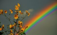 Bb7711 Color Wallpapers Page 2: Rainbow Flower Colorful Sky Flowers