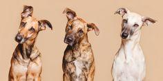 All good dogs... - Wieselblitz - Portrait- und Haustierfotografie von Elke Vogelsang, Hildesheim