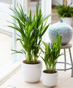 10 houseplants that actually clean the air you breathe a for Areca palm safe for cats
