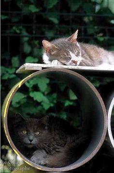 2 chats dans la chatterie du Refuge
