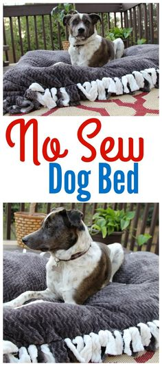 No Sew Dog Bed #ad #FeedDogsPurina @target