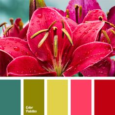 bright color solution, color of fuchsia, color of fuchsia and color of greenery, color of greenery, color selection, contrasting tones, salad green and pink, sea green, shades of pink.