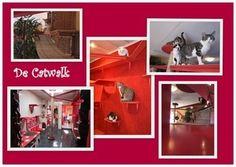 Villa Vacht - catwalk