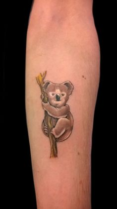 75 Best Koala Tattoo Images Koala Tattoo Koala Bears Koalas