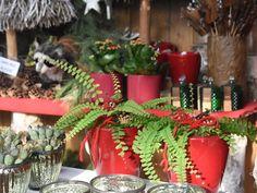 #Farn #Adiantum #caudatum #Erlebnisgärtnerei #Hödnerhof #Ebbs #Mils #Dez #Innsbruck #Eigenproduktion #Jungpflanzen #Weihnachten #Winter #DIY #Floristen #Kreativwerkstatt Amaryllis, Winter Diy, Innsbruck, Table Decorations, Home Decor, Poinsettia, Gift Cards, Plants, Weihnachten