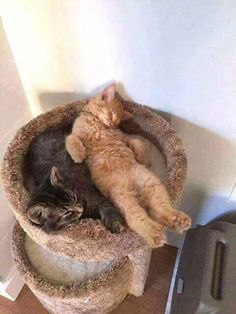 Sleeping kitties. - What more to say other than we just LOVE cool stuff!